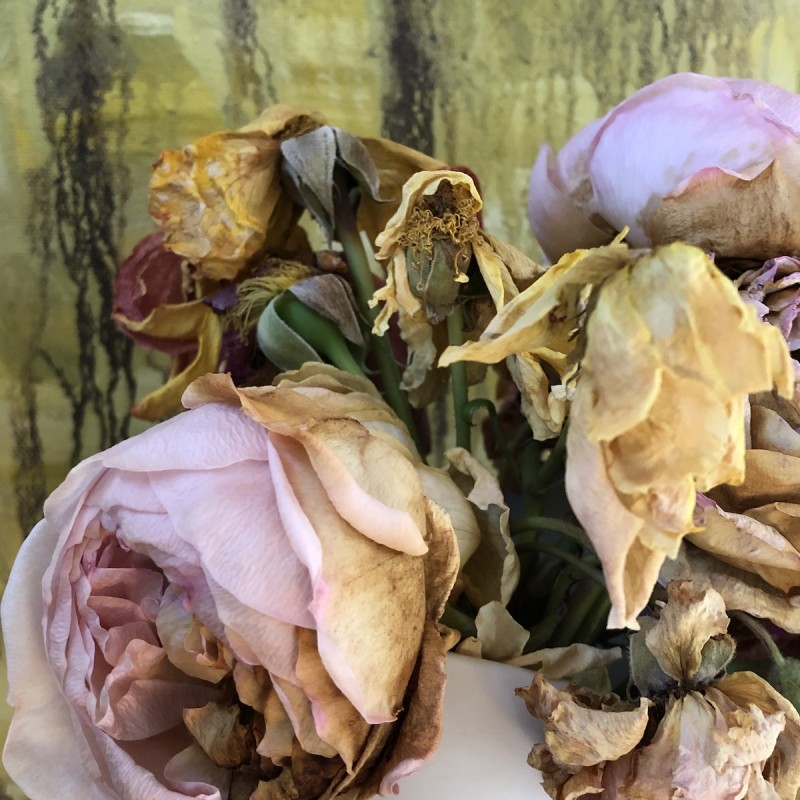 dying yellow pink roses, archival digital print by photographer barbra edwards