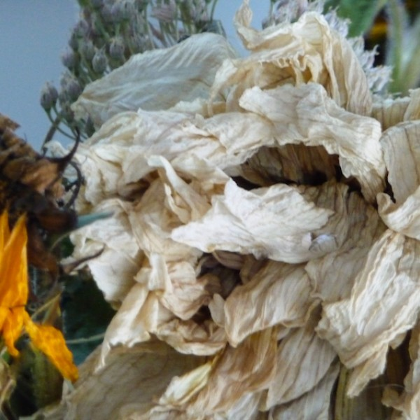 folding petals, transition series (2), Canadian photographer barbra edwards, pender island