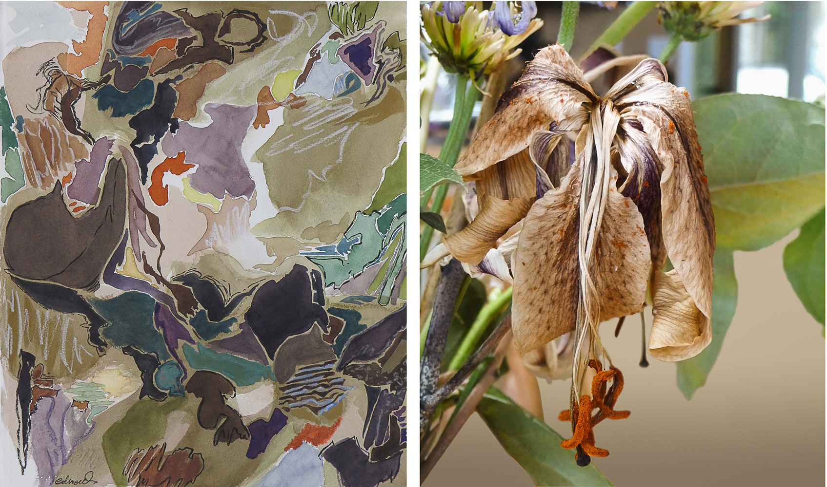 dying lily_digital print with mixed media painting by photographer barbra edwards, Pender Island, British Columbia