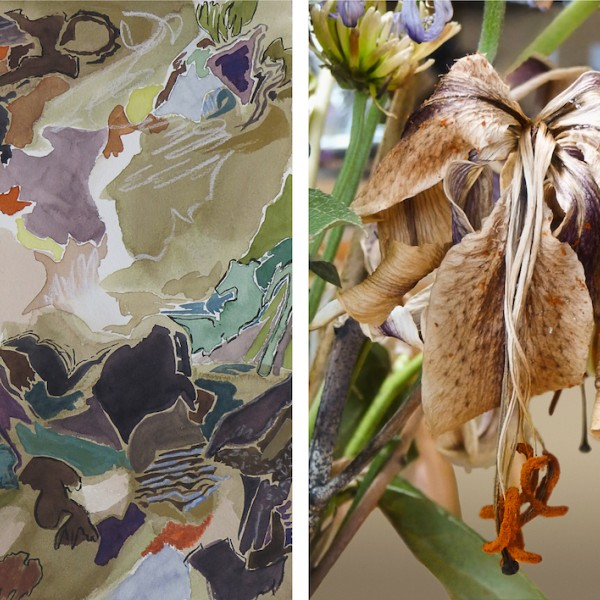 dying lily_digital print and mixed media painting by photographer barbra edwards, Pender Island, British Columbia