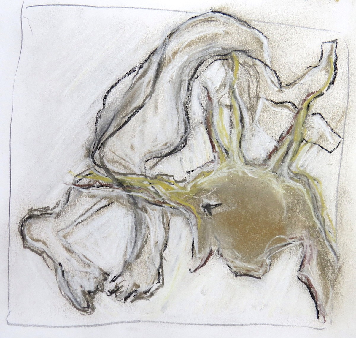 studio drawing in charcoal and pastel by Canadian contemporary artist barbra edwards, Gulf Islands, BC