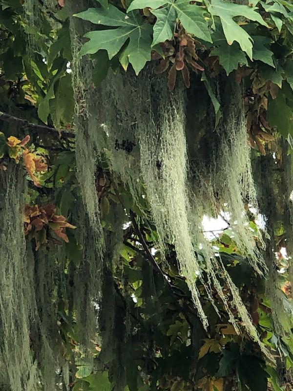west coast moss digital print by Canadian photographer barbra edwards Pender Island BC