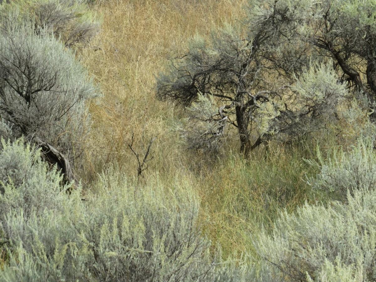 Okanangan, BC desert photographed by canadian artist barbra edwards
