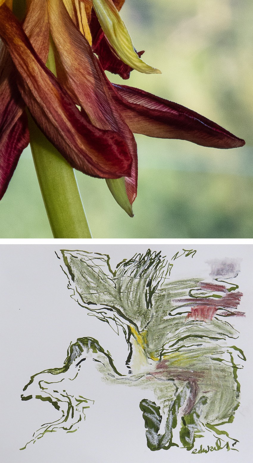 untitled (petals) digital print with drawing by Canadian photographer artist barbra edwards pender island BC