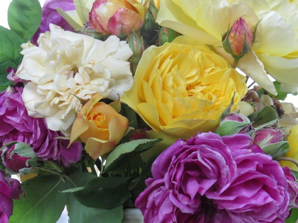 Sandra and Nori Pope's roses