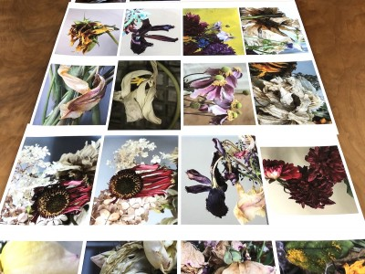 digital photography print proofs Canadian photographer Barbra Edwards Pender island BC